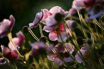 Flowers by Agnieszka  Grodzka