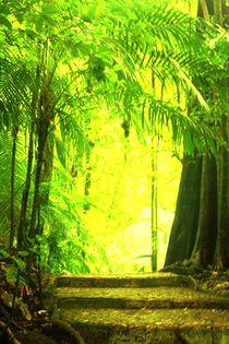 Lichtweg zu der mystischen Kultstätte der Mayas, Palenque in Guatemala von mellieha