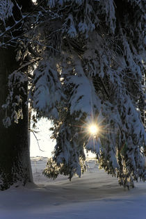 Wald im Winter by Wolfgang Dufner