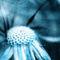Dandelion-fabig-textur-2-2