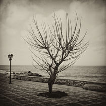 Mediterranian Minimalism by Hasse Linden