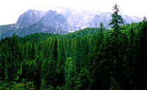 44-alps-forest-06190610