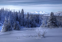 Alaskan landscape in winter von Michele Cornelius