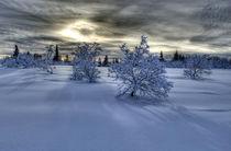 Moody winter scene by Michele Cornelius