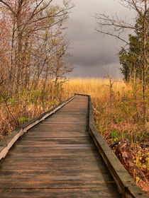 Walkway to Stormy Weather-USA by Nancie Martin DeMellia