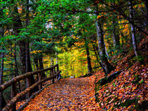 Fall Path-USA  by Nancie Martin DeMellia