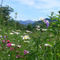 Flower-view-of-the-mountain-1