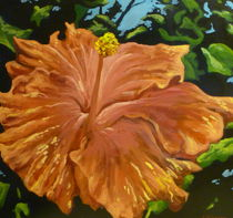Hibiscus by Steven Guy Bilodeau