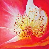 """Rose Study - """"Inner Glow"""" von Niki Arden"""