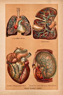 Cardiovascular von Mark Strozier