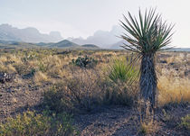 Chisos Mountains von Luc Novovitch