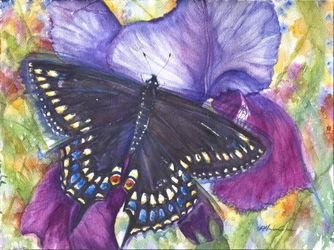 Black-swallowtail-butterfly