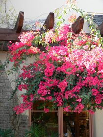 Village Bougainvillea Roof by Warren Thompson