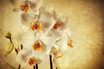 White Orchid by Peggy Graßler