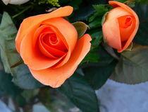 Love-Orange Rose-USA by Nancie Martin DeMellia