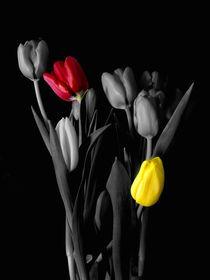 Two in love-Tulips-Flowers by Nancie Martin DeMellia