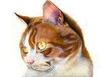 Cat von Alice Ravenna