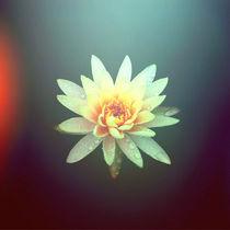 Lily in Water by Samara van Rijswijk