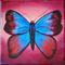 Bllu-butterfly