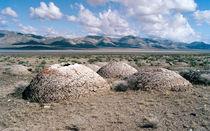 Tufa in Black Rock Desert von Luc Novovitch
