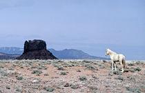 Wandering Horse von Luc Novovitch