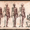 Four-skeletons
