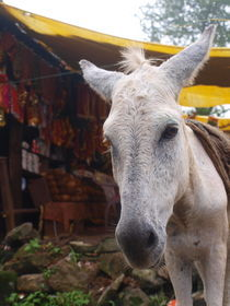 donkey von Martin Binder