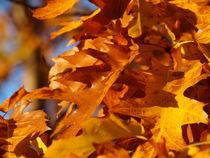 Herbst von Martin Binder