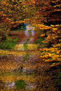Colorful forest path by holka