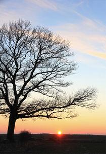 Eiche im Sonnenuntergang by Wolfgang Dufner