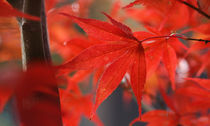 Herbstleuchten von Ursula Pechloff