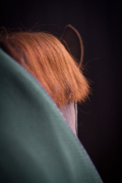 Green-ginger