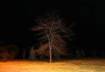 November-night