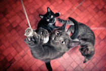 Cats von Severin Sadjina