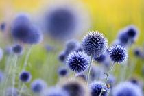 Sommerblau von Ursula Pechloff