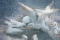 Möwen  von Ursula Pechloff