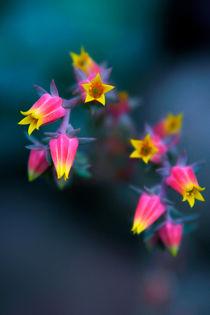 Pink with yellow von Miroslava Andric