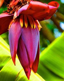 Banana Flower Glow von Margaret Saheed