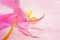 Blütentanz von Jana Behr