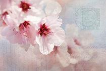 Mandelblüte von Ursula Pechloff
