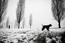 Paseo de perro by carlos sanchez pereyra