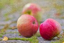 Fallobst- Äpfel von Ursula Pechloff