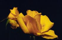 Rosebud 2 von Razvan Anghelescu