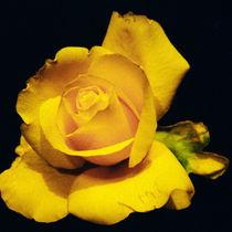 Rosebud 1 von Razvan Anghelescu