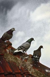 Pigeons 2 von Razvan Anghelescu