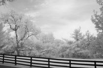Spring Pasture in Central Kentucky von Michael Kloth