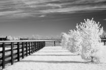 Trees and Fence von Michael Kloth