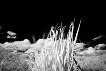 Michael-kloth-ir-landscape-grass-2707-edit