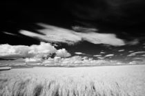 Wheat and Clouds by Michael Kloth