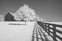 Fence and Barn by Michael Kloth